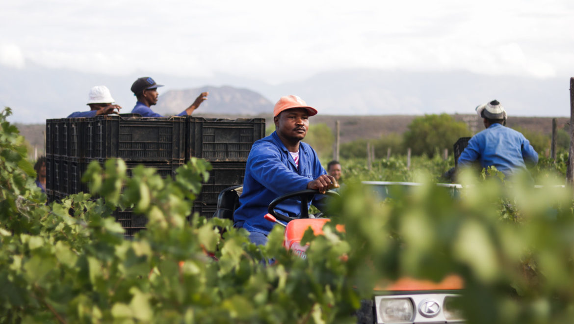 Boplaas hails variety champions in early forecast of Harvest 2019